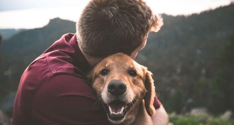 como cuidar a tu mascota