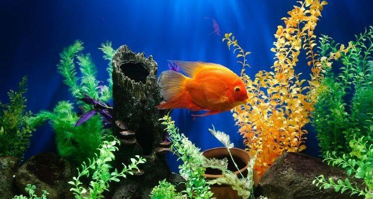 como decorar tu acuario