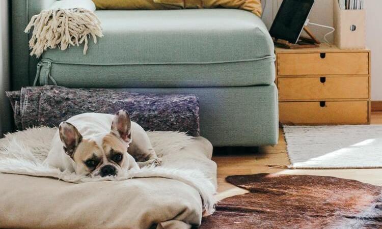 mascotas para tener en casa